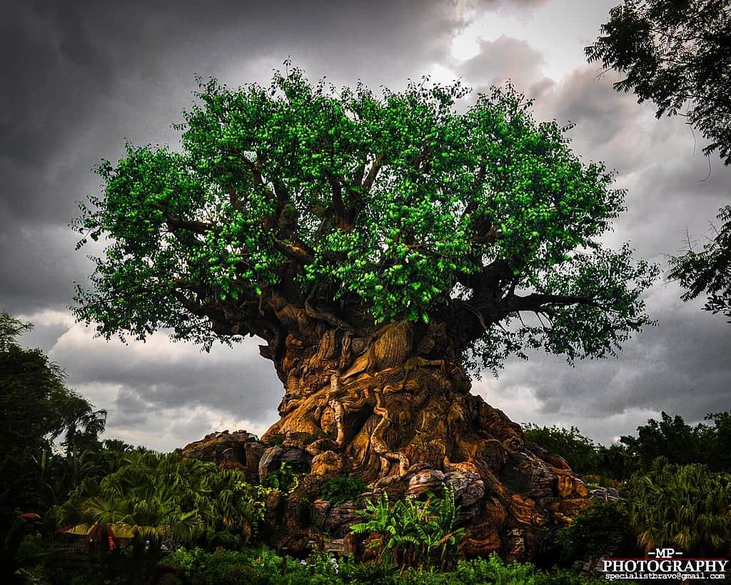 que ver en Orlando-Animal Kingdom